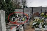 Reksio - pies mieszkający na cmentarzu w Bydgoszczy. Taka jest jego historia prawdziwa
