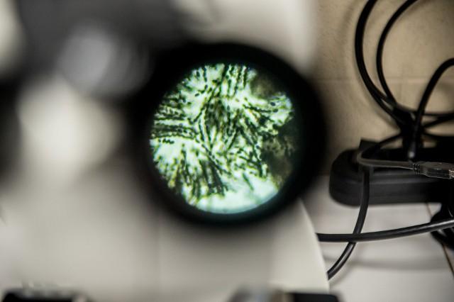 Naukowcy z Wrocławia wyślą grzyby w kosmos. Będą sprawdzać, czy mogą tam żyć