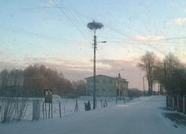 Mieszkańcy wsi Krasne Folwarczne dokarmiają bociana.