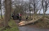 Ciężarówka skosiła drzewo. Strażacy w akcji pod Nowogardem