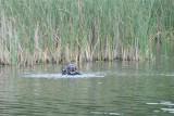 Mężczyzna pływając na materacu w podbydgoskim jeziorze wpadł do wody. Nie przeżył