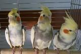 Wystawa ptaków w ŁDK