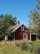 Dom w ogródku działkowym nie będzie stałym adresem. Zobacz oferty działek rekreacyjnych w Rodzinnych Ogrodach Działkowych i nie tylko