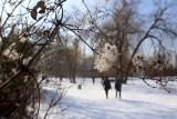 Piękna zima na Skałce w Świętochłowicach na zdjęciach Lucyny Nenow, fotoreporterki DZ. Zimowa kraina w środku Śląska