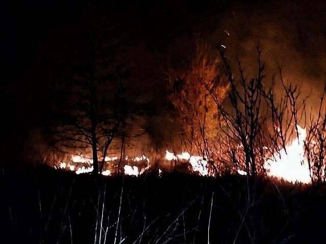 Pożar traw między Kryształowicami i Olbrachtowicami