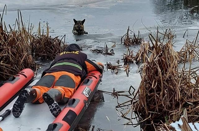 Strażacy z Czaplinka uratowali psa, który wszedł na zamarznięte jezioro