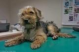 Śledczy zajmą się sprawą rannego psa