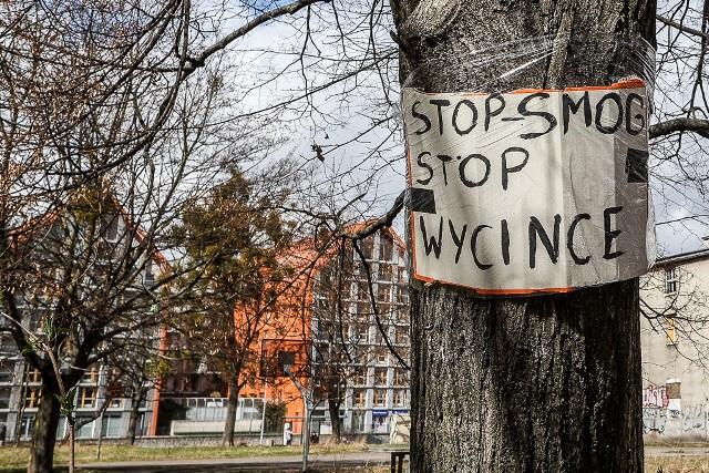 Mieszkańcy Dolnego Miasta obawiają się wycinki drzew