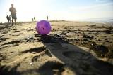 Kalifornia: ogromny wyciek ropy z podwodnej platformy. Skażone plaże, martwe ptaki i ryby