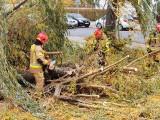 Skutki wichury w Kujawsko-Pomorskiem! Straż pożarna interweniowała ponad 1400 razy