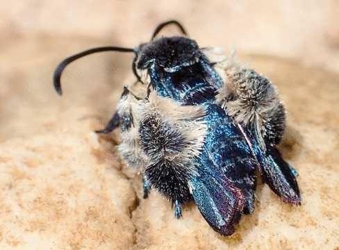 Odnaleziony po 130 latach motyl