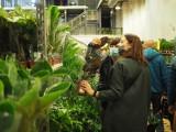 Festiwal roślin doniczkowych w EC1. Mnóstwo gatunków z różnych stref klimatycznych. Jest w czym wybierać!