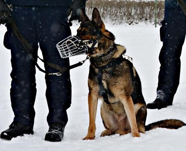 Policyjny pies odnalazł zaginionego sześciolatka
