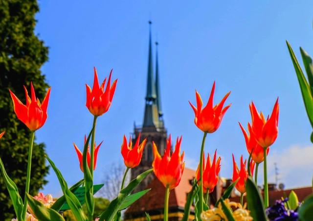 Wiosna - choć później niż w minionych latach, w końcu wygrała z zimą. Zrobiło się cieplej i piękniej. Zobaczcie, które miejsca we Wrocławiu zachwycają szczególnie o tej porze roku. Do kolejnych zdjęć można przejść za pomocą strzałek, lub gestów.