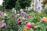 Bydgoszcz w kwiatach i zieleni. Zobaczcie, jak prezentuje się ogród pana Ryszarda [13.08]