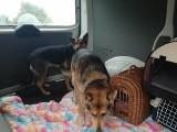 Bytomianka trzymała ponad 50 zwierzaków w koszmarnych warunkach DRASTYCZNE ZDJĘCIA