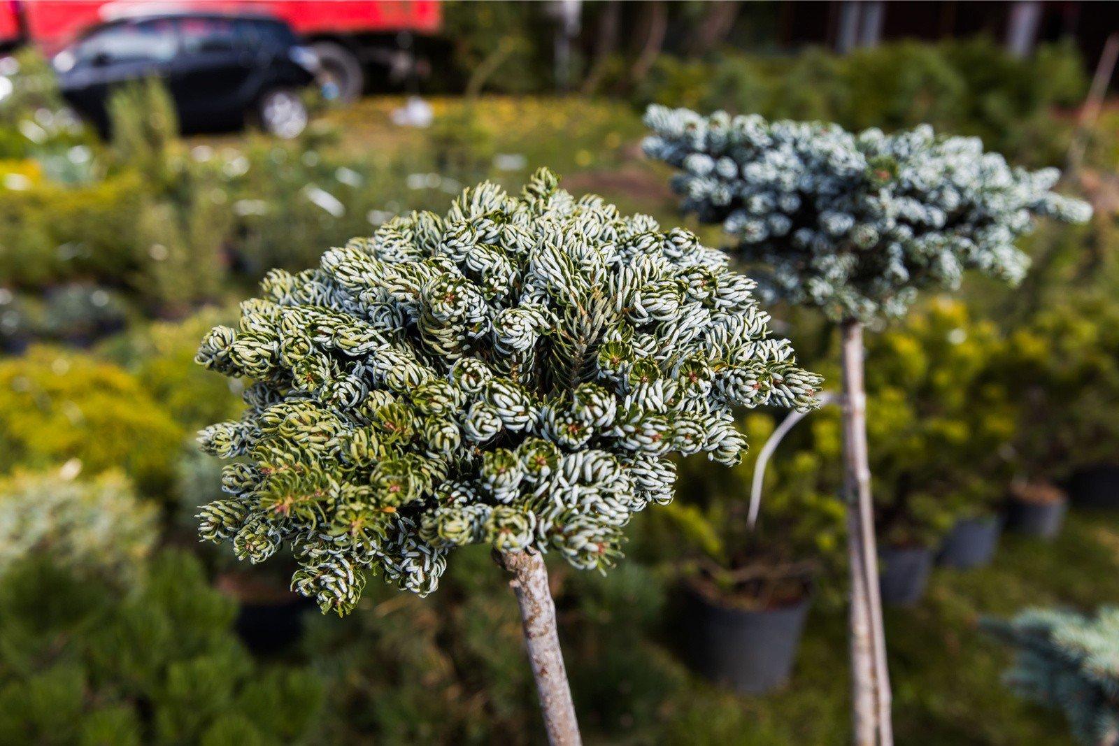 Ogrodowe Hity Jakie Kwiaty I Rosliny Warto Posadzic W Ogrodzie A