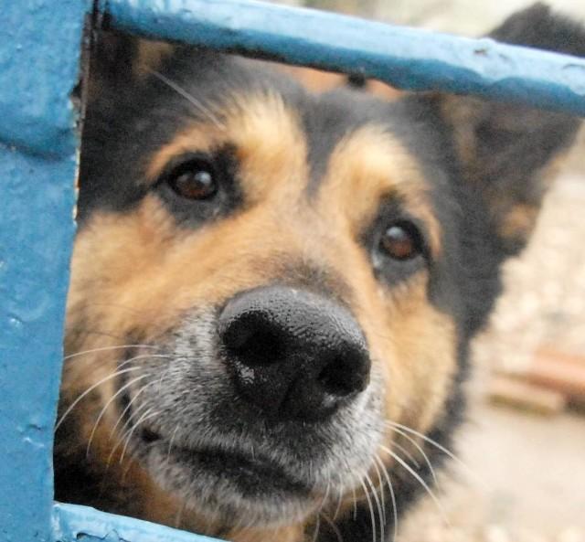 Schronisko pęka w szwach, ma o 50 psów więcej niż miejsc. Ale ludzie i tak nic sobie nie robią i stale podrzucają zwierzęta.