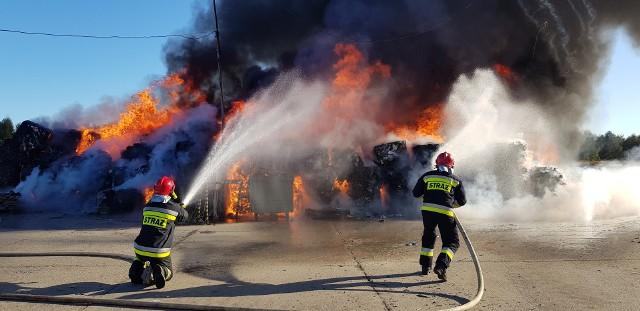 """Do pożaru doszło w sobotę, 29 września około godz. 9.00. Zapaliłoi się składowisko opon koło Sulechowa. Na miejscu zdarzenia było 8 zastępów strażaków oraz burmistrz Sulechowa.Zgłoszenie o pożarze składowiska opon i makulatury w Nowym Świecie dotarło do strażaków około godz. 9.15 strażacy otrzymali zgłoszenie o pożarze składowiska opon i makulatury w Nowym Świecie koło Sulechowa. O zdarzeniu informowali nas też Czytelnicy, którzy ze swoich domów, bądź z trasy S3 dostrzegali kłęby dymu.<script class=""""XlinkEmbedScript"""" data-width=""""640"""" data-height=""""360"""" data-url=""""//get.x-link.pl/94756664-4166-c151-88ad-727e98bbf99c,549f1403-ccee-4ef3-5378-464f2c46a33b,embed.html"""" type=""""application/javascript"""" src=""""//prodxnews1blob.blob.core.windows.net/cdn/js/xlink-i.js?v1""""></script>Jak poinformował nas Łuksz Łyko, dowódca jednostki ratowniczo gaśniczej w Sulechowie, pożar udało się opanować w ciągu dwóch godzin. Akcja strażaków przebiegała sprawnie. - Pożar został szybko opanowany - informował nas na miejscu zdarzenia.W miejscu pożaru pojawił się też Maksymilian Koperski z komendy miejskiej straży pożarnej w Zielonej Górze oraz Mirosław Ganecki, wojewódzki inspektor ochrony środowiska.- Akcja jest już zakończona, trwa tylko puktowe nawilżanie. Nie ma już żywego ognia. Zdążyła się zapalić dosyć duża powierzchnia, a ogień mocno się rozprzestrzeniał, ponieważ materiał był mocno wysuszony. - mówił nam na miejscu zdarzenia około godz. 12.00 M. Ganecki. Należy jednak zaznaczyć, że punkty zajęte ogniem oddzielone były od siebie drogami dojazdowymi, co ułatwio walkę z ogniem.Wojewódzki inspektor ochrony środowiska zaznaczył również, że nie ma żadnego zagrożenia ekologicznego, ani zagrożenia zdrowia ludzi, czy też zwierząt.- Składowisko znajdowało się na terenie utwardzonym kostką, więc nic nie dostało się do gruntów, Dym, który dostał się do atmosfery już rozprzestrzenił się, nikomu nic więc nie grozi. Dodam też, że właściciel terenu właściwie składował odpady. Doszło tutaj do nieszczęśliweg"""