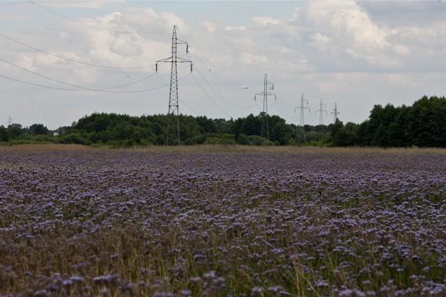 GUS przedstawił informacje o tym ile płacono w Polsce za grunty orne w ubiegłym roku.