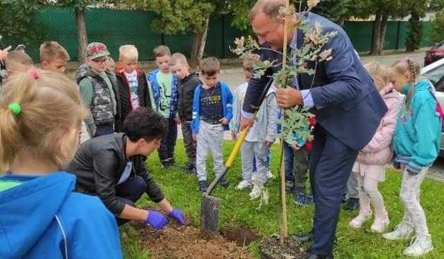 Sadzonki dębów zostały zasadzone przy szkołach i przedszkolach w całej gminie. Dzieciom pomagał w tym burmistrz Ryglic i wychowawcy