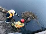 Dobrzyniewo Fabryczne. Strażacy wyciągnęli z rzeki zwłoki łosia i dzika (zdjęcia)
