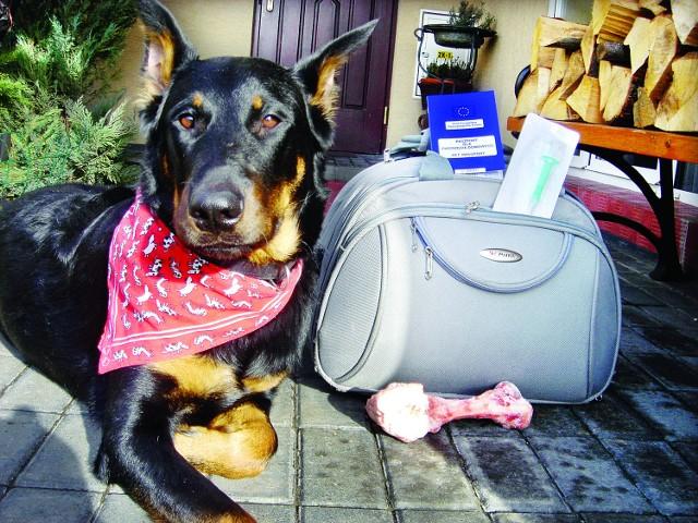 Czworonożny przyjaciel z własnym paszportem czeka na rozpoczęcie podróży. Fot. Krzysztof Łokaj