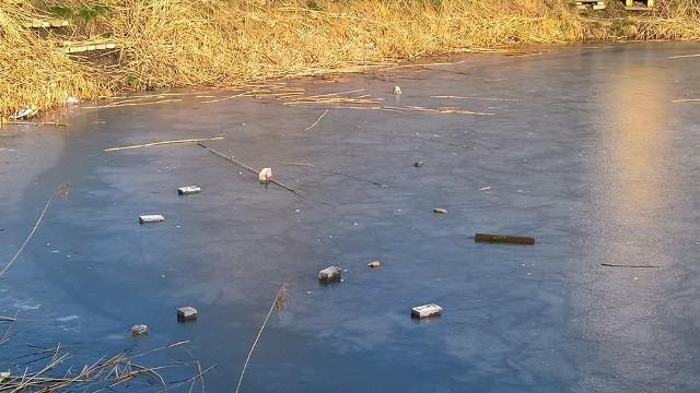 Wandale ostatnio zanieczyścili stawek na osiedlu Piastowskim. Wrzucali do niego cegły, sztachety i butelki.