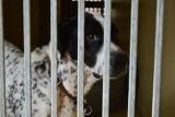 """Gdyńskie """"Ciapkowo"""" uratuje 20 psów ze schroniska w Radysach! """"To zwierzaki, które zostały dotknięte wieloma tragediami"""""""
