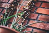 Tak należy suszyć grzyby. Które nadają się do suszenia? Dzielimy się domowymi sposobami