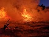 To było piekło na ziemi! Pożar w lesie koło Cybinki postawił na nogi strażaków i leśników. Prawdopodobnie to było podpalenie