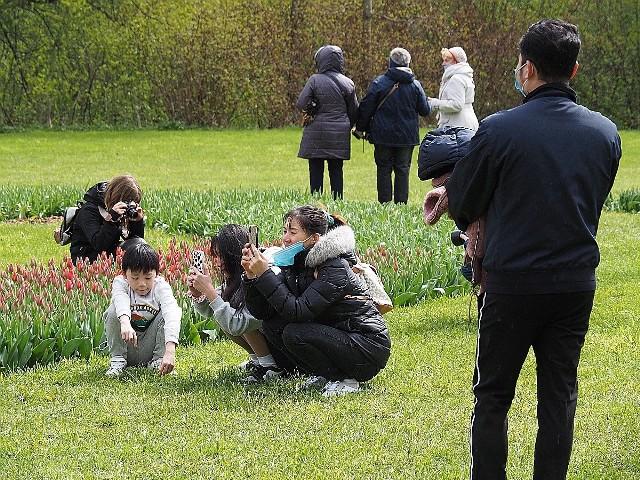 Tulipany kwitną w ogrodzie botanicznym w Łodzi. Po chłodnej majówce zakwitnie 50 tys. tulipanów. Wyjątkowo zimna wiosna sprawiła, że kwiaty w tym roku kwitną później niż w latach ubiegłych. Pracownicy ogrodu spodziewają się, że cała kolekcja tulipanów rozkwitnie w przyszły weekend, czyli 8-9 maja. Ogród czynny jest codziennie od godz. 9 do 20, bilety kosztują 8 i 4 zł.ZOBACZ ZDJĘCIA >>>>...
