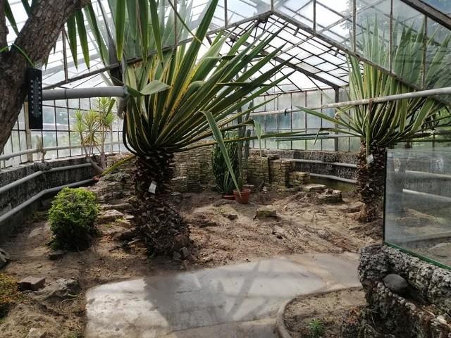 Tak wyglądają obecnie opustoszałe pawilony z egzotycznymi roślinami. Egzotarium szykuje się do przeprowadzki.Zobacz kolejne zdjęcia. Przesuwaj zdjęcia w prawo - naciśnij strzałkę lub przycisk NASTĘPNE