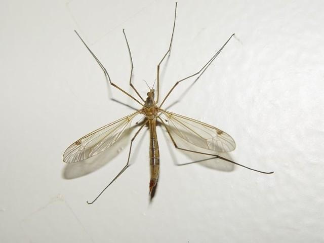 Białostoczanie skarżą się na uciążliwe owady. Najbardziej cierpią bywalcy ogródków kawiarnianych