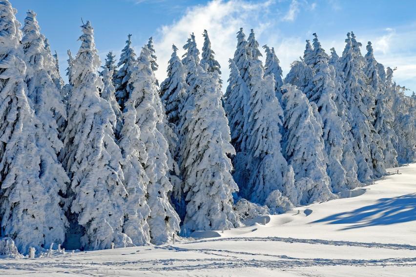 Jaka będzie zima? Niskie temperatury i niewielkie opady śniegu - prognoza pogody na zimę