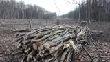 Wycinają 21 hektarów lasu pod budowę drogi Racibórz Pszczyna ZDJĘCIA + WIDEO