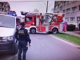 Kot ze Szczecinka utknął w oknie. Straż pożarna z odsieczą [zdjęcia]