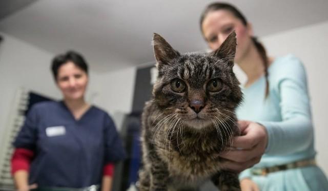 Gdzie w Łodzi wykonać za darmo sterylizacje psów i kotów? Przedstawiamy listę przychodni