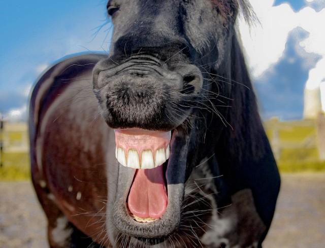 ŻARTY NA PRIMA APRILIS. Zobacz najfajniejsze żarty na Prima Aprilis [1.04.2018] Sprawdź pomysły na żarty