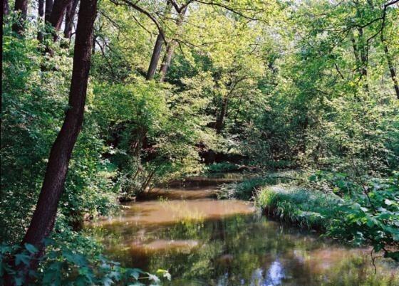 Wiele miejsc na terenach Nadleśnictwa Krosno zachwyca