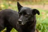 Oto Gary! Pies, który przebiegł 30 km, żeby wrócić do starego domu. Poznajcie historię podopiecznego Stowarzyszenia Paka dla Zwierzaka!