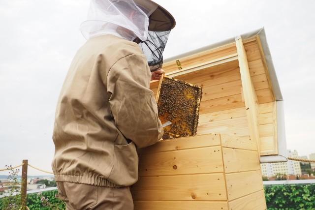 Na dachu Galerii Rzeszów otwarto dziś Pasiekę w Sercu Miasta. Zamieszkało tam prawie pół miliona pszczół. Pomysłodawcami tego przedsięwzięcia są bracia Rafał i Maciej Szela. Dzięki nim działa pierwszy w Polsce Bank Pszczeli.