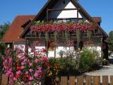 Te kwiaty balkonowe przechowasz do wiosny. Zobacz, jak przezimować kwiaty z balkonu i które gatunki się do tego nadają