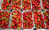 Ceny truskawek, czereśni, innych owoców i warzyw na giełdzie w Białymstoku