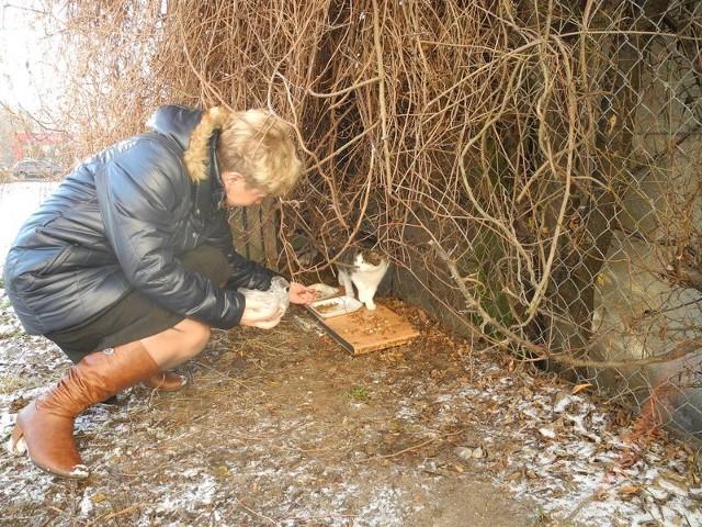 Koty potrzebują schroniska. Urzędnicy twierdzą, że nie mają na to pieniędzy.