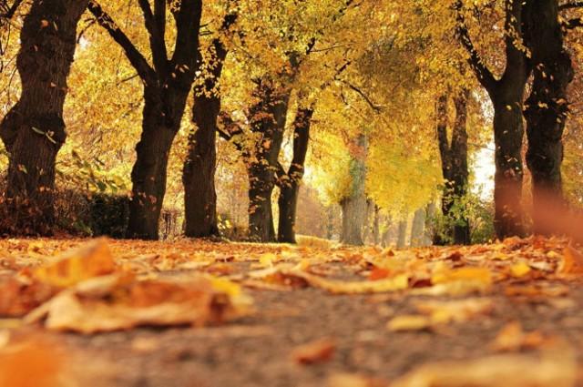 Pogoda na jesień. Dzisiaj pierwszy dzień jesieni! Czy czeka nas polska złota jesień? Sprawdź prognozę długoterminową