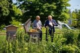 Białystok. Pierwsze w tym roku miodobranie w miejskiej pasiece nad rzeką Białą. Przybyły w niej dwa nowe ule