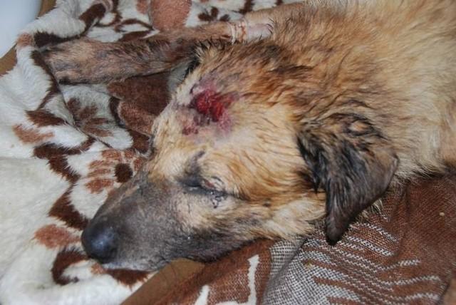 Pies Alek krótko po odnalezieniu przez inspektorów TOZ