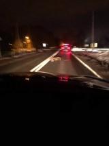Wypadek w Wodzisławiu Śl. Samochód zderzył się z dzikiem na ulicy Bogumińskiej. Niestety, takich zdarzeń może być więcej