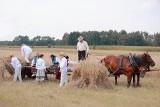 Żniwa w gminie Jastrzębia koło Radomia i zabawa dla całych rodzin. Zobacz zdjęcia